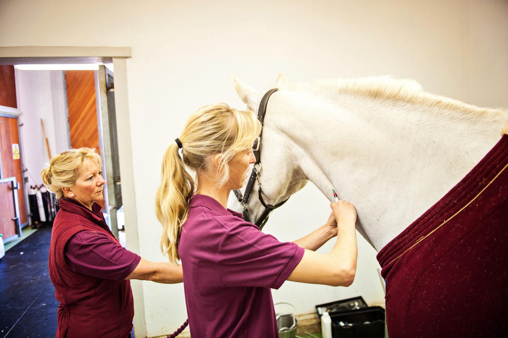Equine sedation for dentistry