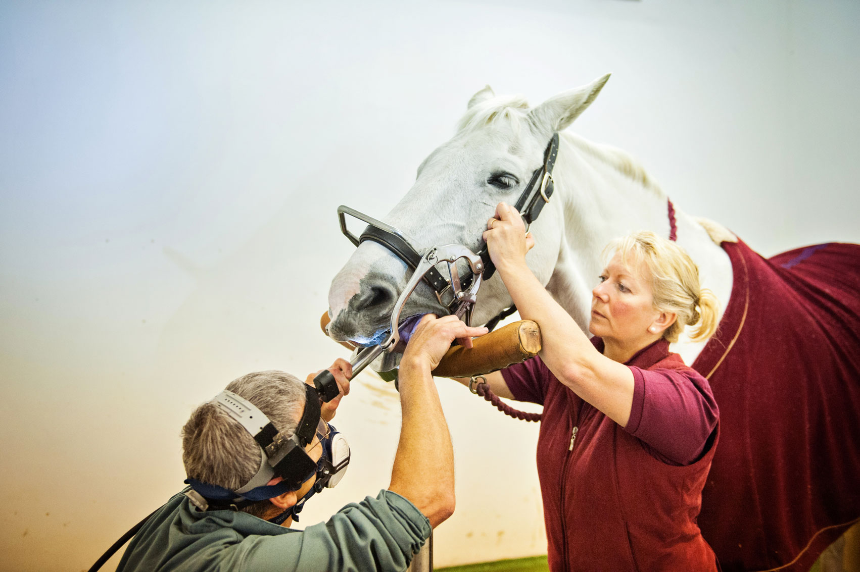 Equine dental surgery